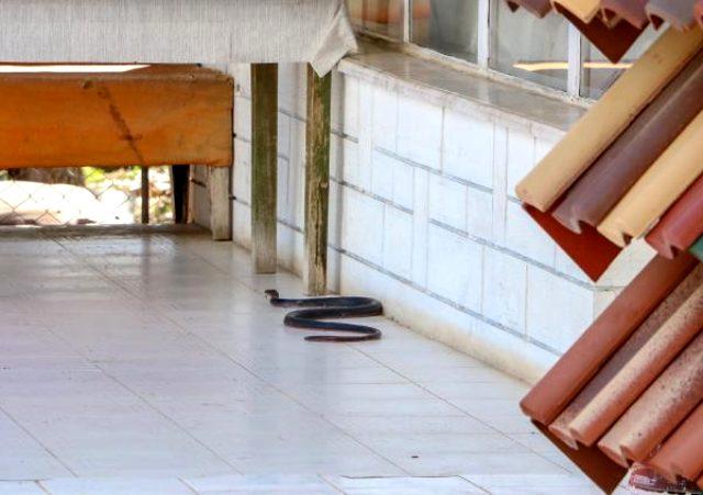 Antalya'da zehirli yılanlar vatandaşı tedirgin ediyor