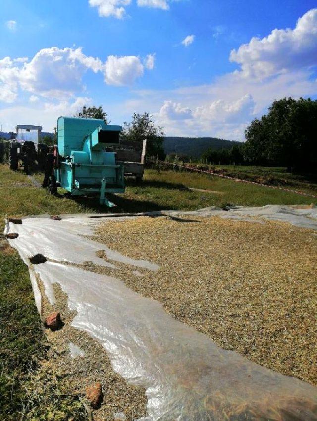Hasat yapan çiftçi, patos makinesine düşerek can verdi