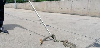 Halk otobüsüne giren 2 metrelik zehirli yılan, ekipleri seferber etti