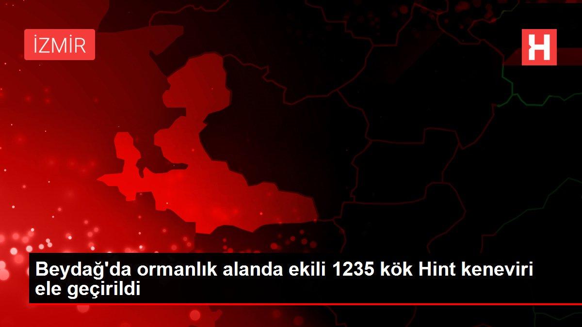 Beydağ'da ormanlık alanda ekili 1235 kök Hint keneviri ele geçirildi