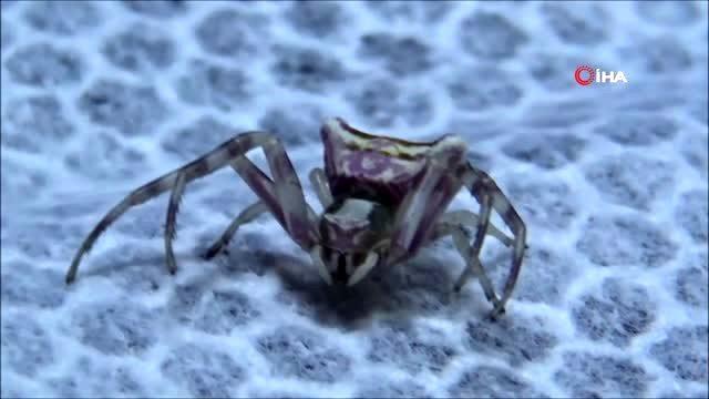 Edirne, evinin balkonunda bulduğu insan yüzlü örümcekle arkadaş olan kadını konuşuyor