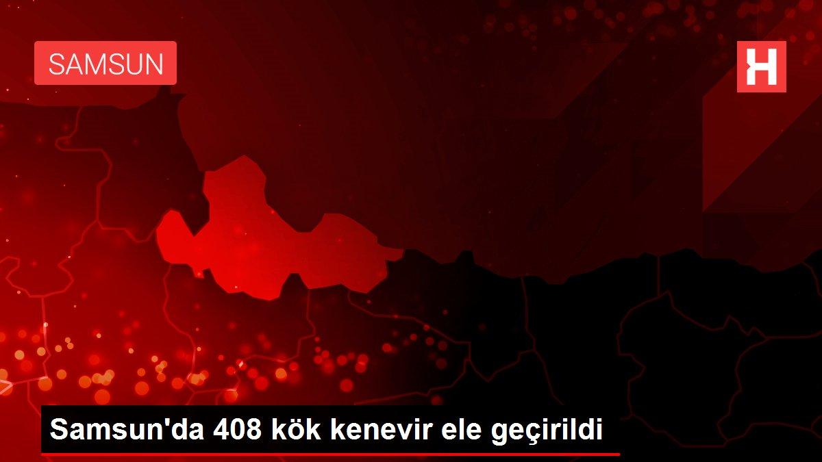 Samsun'da 408 kök kenevir ele geçirildi