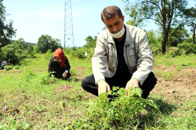Tavan arasında bulduğu ata tohumlarını çoğaltan çiftçi talebe yetişemiyor