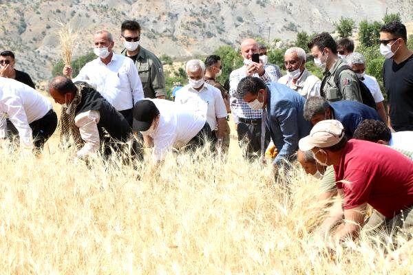 Son dakika haberleri: Şırnak'ta buğday hasadı şenliği düzenlendi