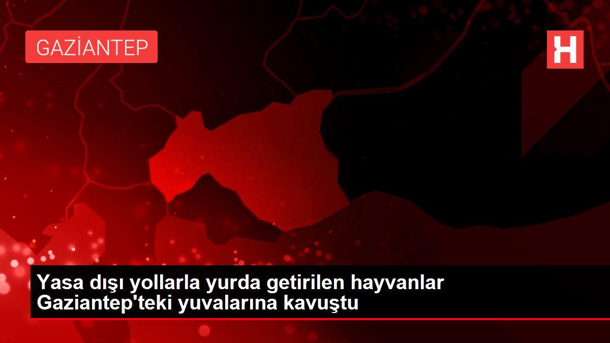 Yasa dışı yollarla yurda getirilen hayvanlar Gaziantep'teki yuvalarına kavuştu