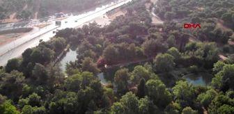 Recep Yaşar: Son dakika haberi... KAHRAMANMARAŞ Yasak kalktı, gelin-damatlar Botanik Bahçesi'ne akın etti