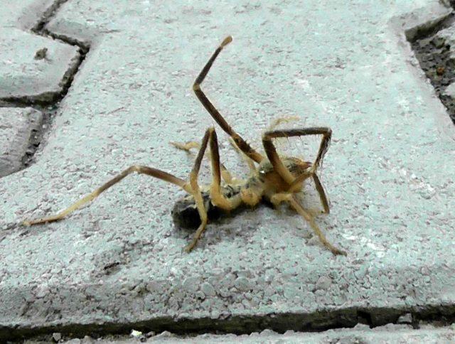 İç Anadolu'daki kentimizde görülen et yiyen örümcekten dolayı vatandaşlar tedirgin