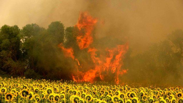 Gelibolu Yarımadası'nda orman yangını! 300 hektara yakın bir alan kül oldu