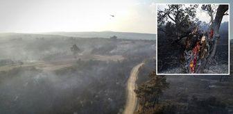 Demirci: Gelibolu Yarımadası'nda dün çıkan orman yangınına arıcıların sebep olduğu düşünülüyor