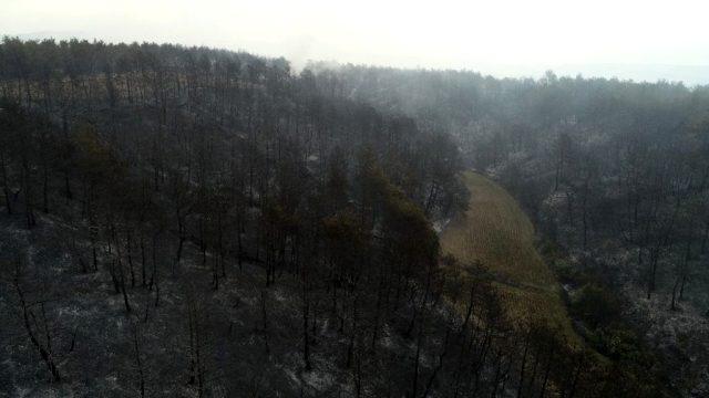 Son dakika: Gelibolu'daki orman yangınında şu ana kadar 450 hektar alan yandı