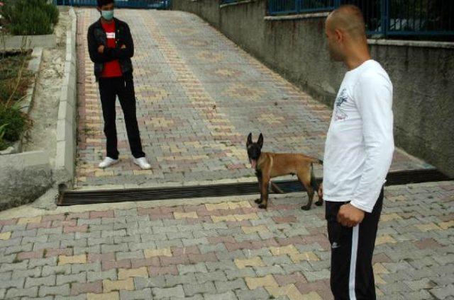 Kahramanmaraş'ta çalınan 'Pablo' isimli köpek Hatay'da bulundu