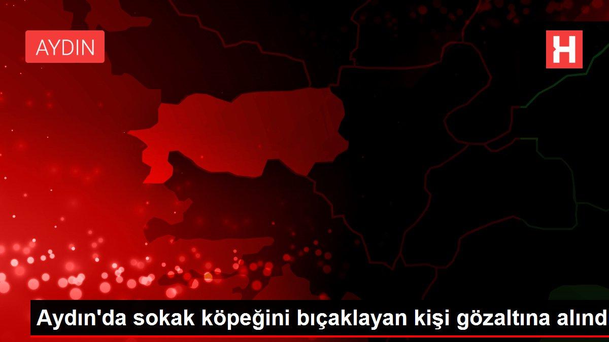 Aydın'da sokak köpeğini bıçaklayan kişi gözaltına alındı