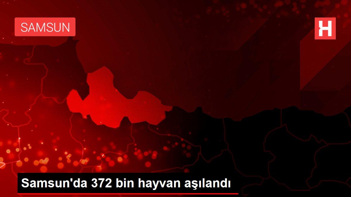 Samsun'da 372 bin hayvan aşılandı