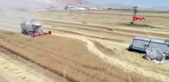 Ulusal Hububat Konseyi üyesi Prof. Dr. Soylu: Arpa ve buğdaydaki verim umut verici