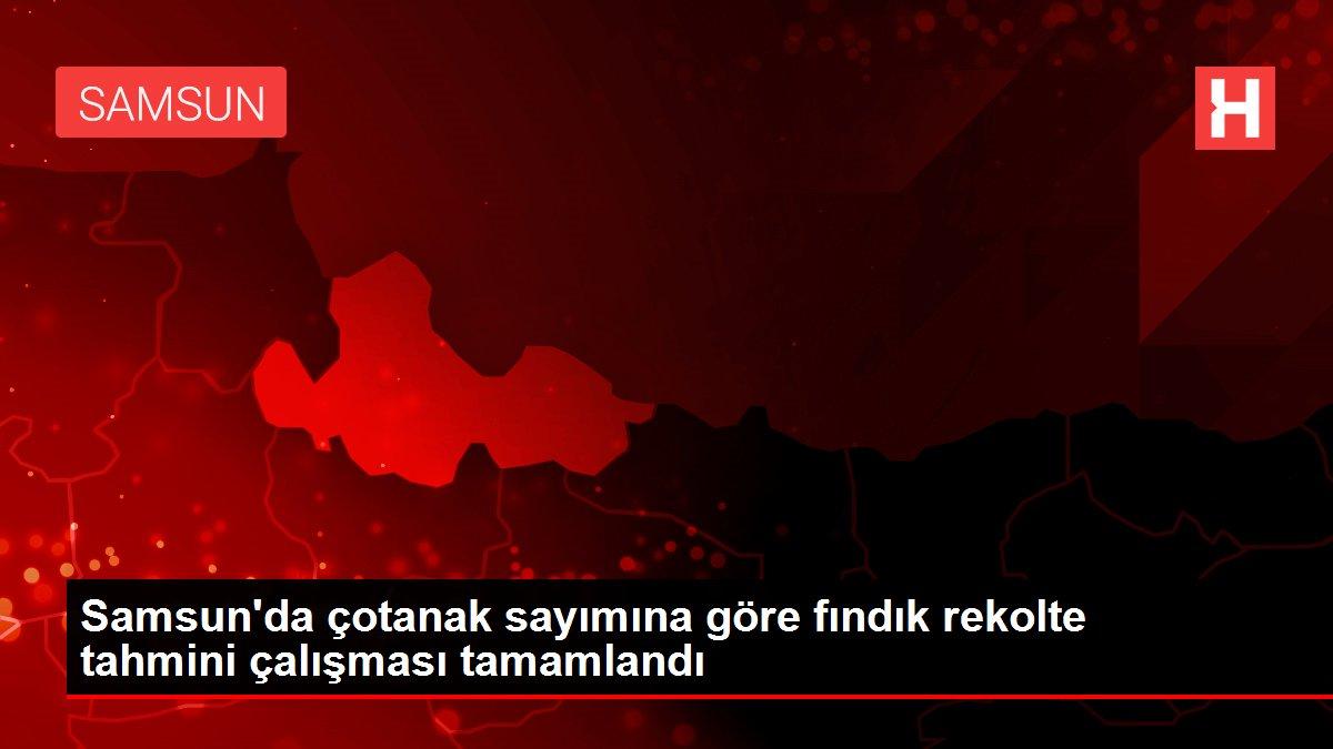 Samsun'da çotanak sayımına göre fındık rekolte tahmini çalışması tamamlandı