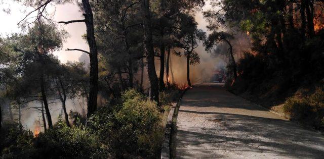 Son Dakika: İBB, Heybeliada'da çıkan orman yangınının kontrol altına alındığını açıkladı