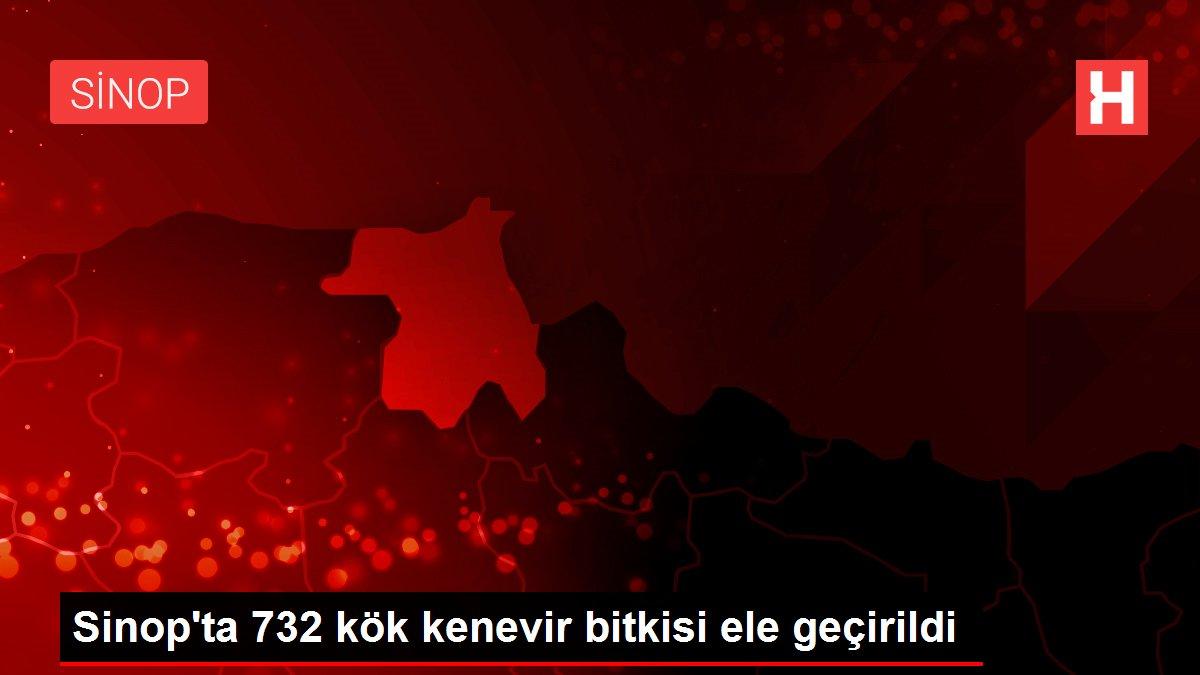 Sinop'ta 732 kök kenevir bitkisi ele geçirildi