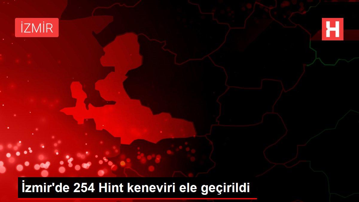Son dakika haberleri: İzmir'de 254 Hint keneviri ele geçirildi
