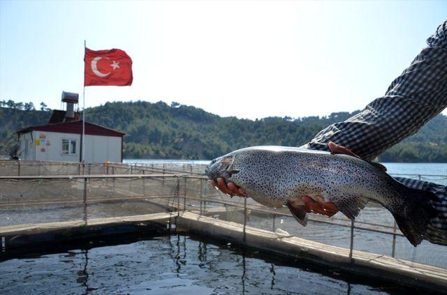 Denizi olmayan Kahramanmaraş'tan yıllık 25 milyon dolarlık balık ihracatı yapılıyor