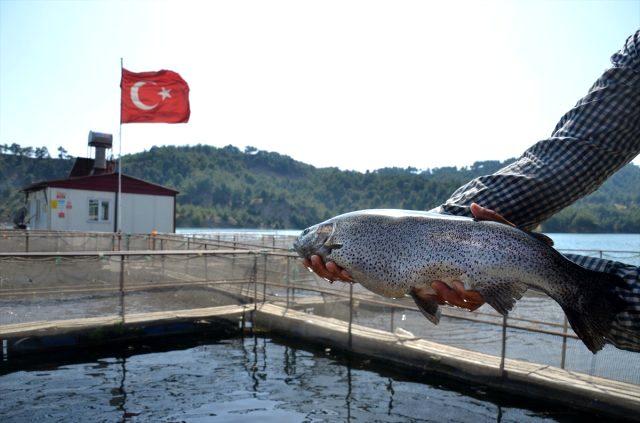 Kahramanmaraş balık tesisleri sayesinde yıllık 25 milyon dolarlık balık ihracatı yapılıyor