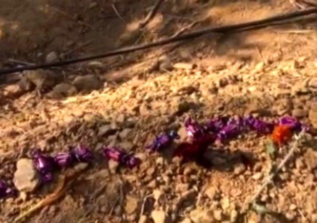 Eski sevgili kurbanı Pınar Gültekin'in mezarına bırakılan bayram şekerleri dikkat çekti
