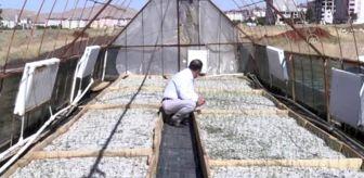Afşin, lavanta tarlalarıyla turizme kapı aralıyor