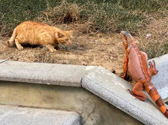 Üsküdar'da bulunan iguanaya Kurban Bayramı'na ithafen 'Bayram' ismi verildi