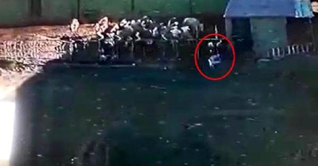 Boğa saldırdığı sahibini öldürdü, o anlar kameraya yansıdı