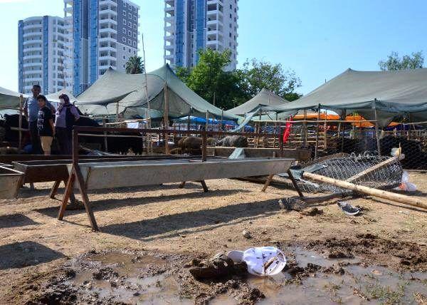 Hayvan pazarında yer kavgası: 2 ağır yaralı