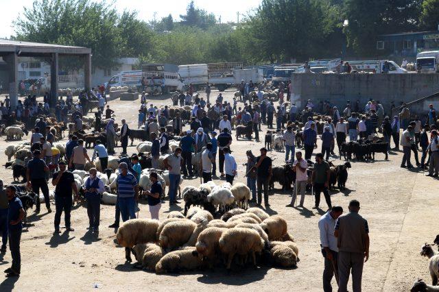 Diyarbakır'daki kurbanlık pazarlarında tedbirler hiçe sayıldı