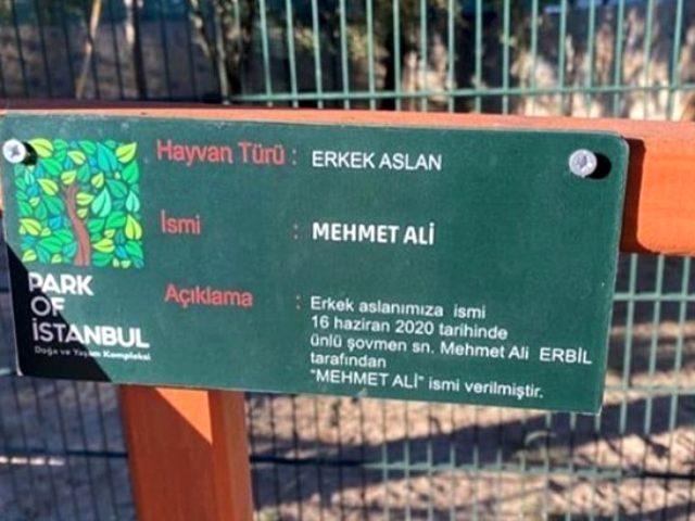 Mehmet Ali Erbil, hayvanat bahçesinde bulunan 2 aylık aslana ismi verdi