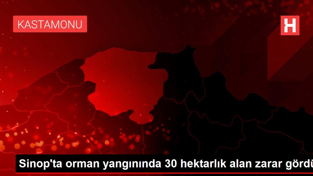 Sinop'ta orman yangınında 30 hektarlık alan zarar gördü