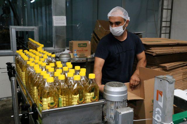 Ordu'da üretilen aspir yağı 7 ülkeye ihraç ediliyor