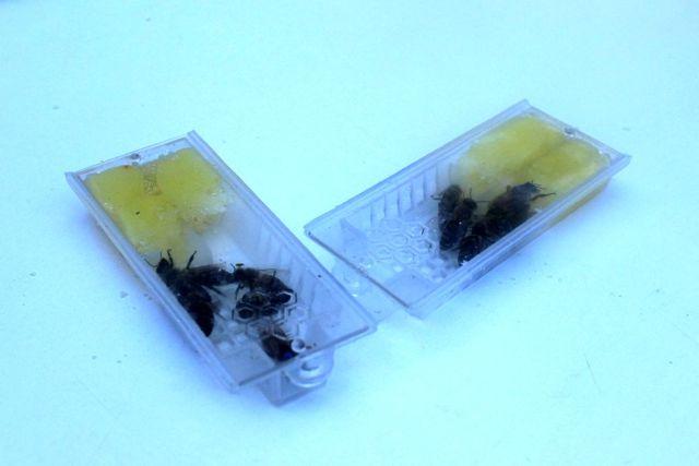 Son dakika! Giresun ekotipi ana arının yaygınlaştırılması hedefleniyor