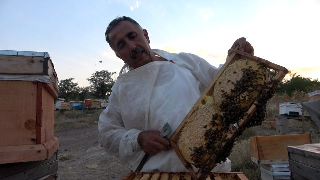 Kırıkkale'de 10 çeşit bitkiden elde edilen her derde deva balın kilosu 100 lira