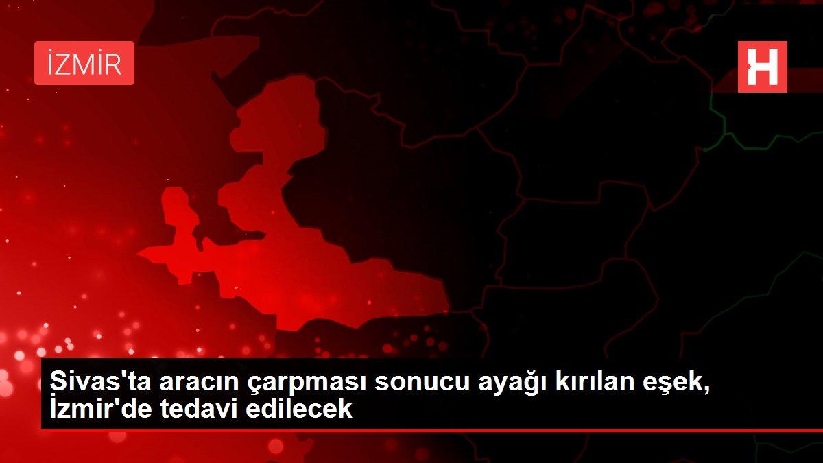 Sivas'ta aracın çarpması sonucu ayağı kırılan eşek, İzmir'de tedavi edilecek