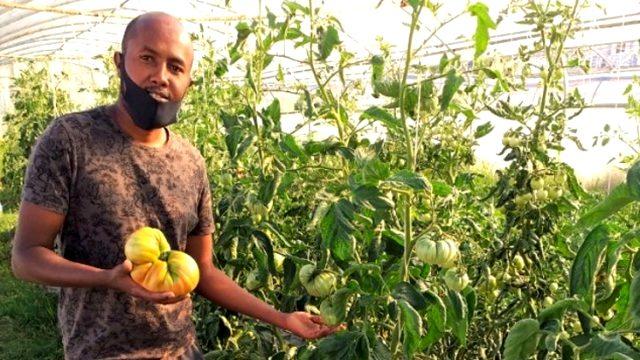 Somalili öğrenci 1 kilo 130 gram domates yetiştirerek Türkiye rekoru kırdı