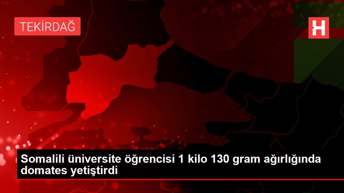 Son dakika haberleri... Somalili üniversite öğrencisi 1 kilo 130 gram ağırlığında domates yetiştirdi