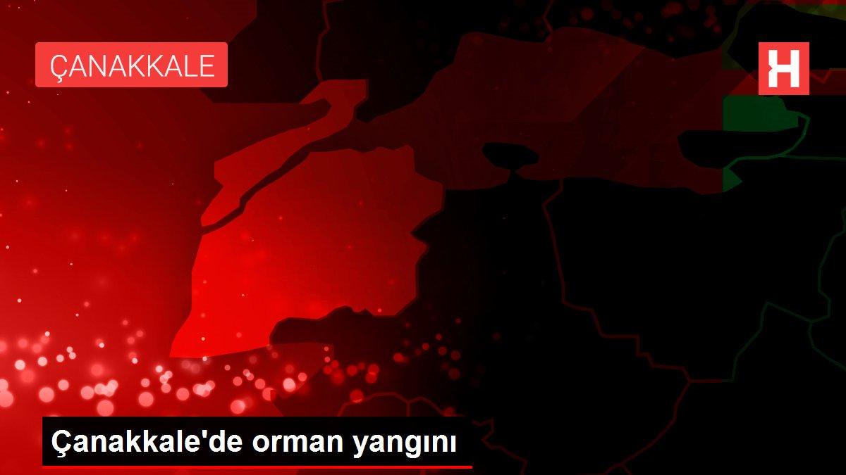 Son dakika haberi: Çanakkale'de orman yangını