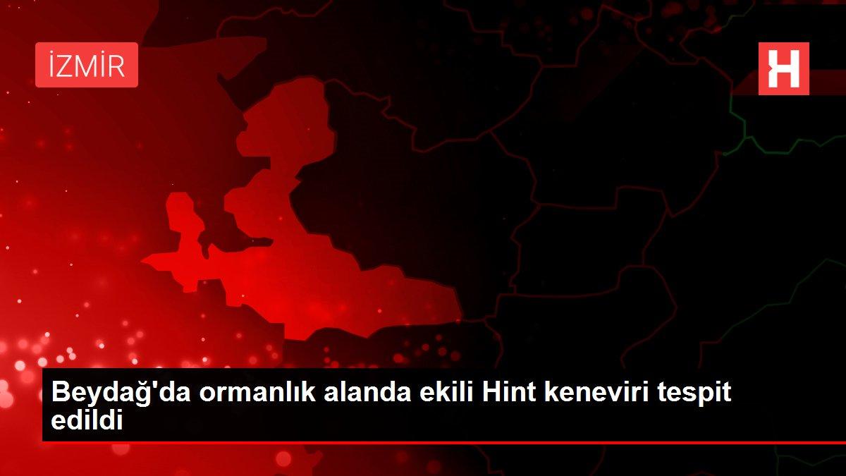 Beydağ'da ormanlık alanda ekili Hint keneviri tespit edildi
