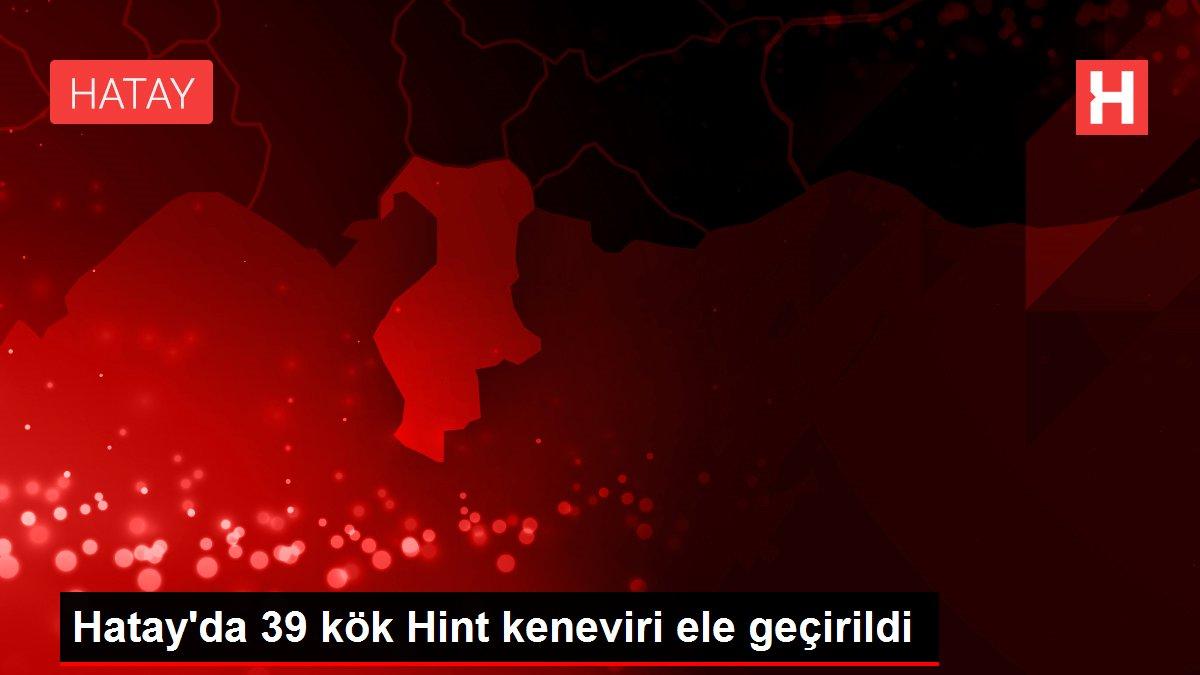 Hatay'da 39 kök Hint keneviri ele geçirildi