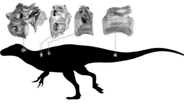 İngiltere'de T-Rex'in kuzeni yeni bir dinozor türü keşfedildi