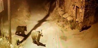 Hafik: Son dakika haberi! Köye inen ayılar kamerada