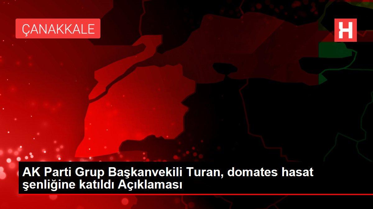 AK Parti Grup Başkanvekili Turan, domates hasat şenliğine katıldı Açıklaması