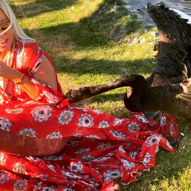 Saba Tümer, sevmek istediği siyah kuğunun saldırısına uğradı