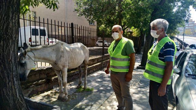 Görenler gözlerine inanamadı! Başıboş at, saatlerce şehrin göbeğinde dolaştı