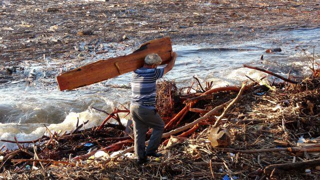 Selin Karadeniz'e sürüklediği ağaçları vatandaşlar kışın yakmak için topladı