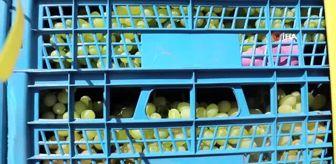 Hüseyin Çınar: 23 ton üzümü zabıta yardımıyla kurtardı