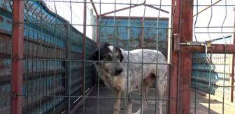 Mehmet Onur: Midyat Belediyesinden, sokak hayvanlarına yönelik çalışma