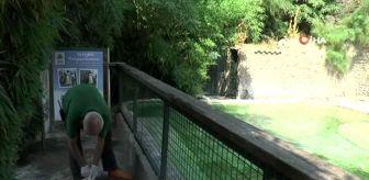 Faruk Yalçın Hayvanat Bahçesi: Sıcaktan bunalan hayvanlar buzlu besinlerle serinliyor